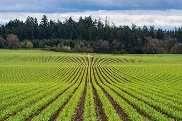 Precision Farming Market- Global Research Analysis, Trends, Competitive Share And Forecasts 2018 – 2026