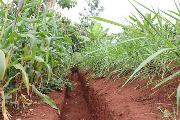 Preventing and managing the soil erosion problem