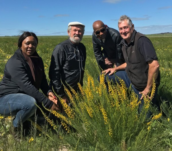 The scientific breakthrough that could turn Australia's arid land into green pasture