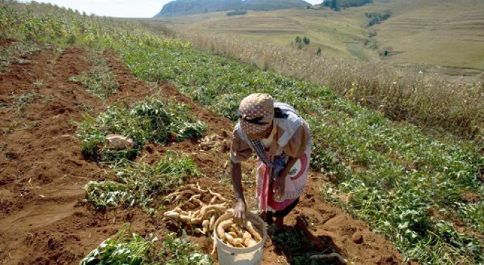 Eswatini and IFAD partner to boost inclusive financial services for smallholder farmers