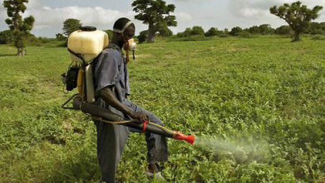 Four pesticide regulatory pillars are the route to food security