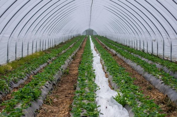Micro Irrigation Systems Market: Savvy Players Vie to Develop Innovative Products to Surge ahead