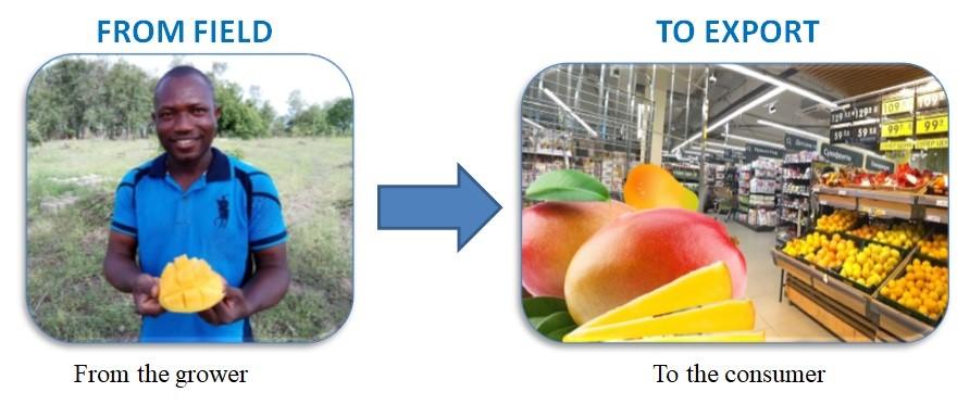 Bridging the Fresh Fruits' Export Gap