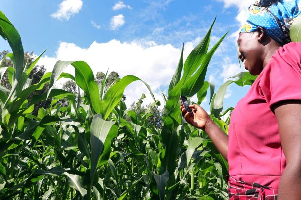 African farmers lose export market access amidst COVID-19 crisis