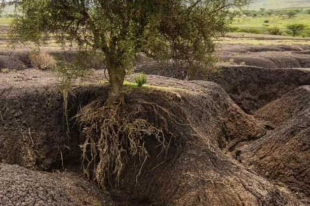 Plant root hairs key to reducing soil erosion
