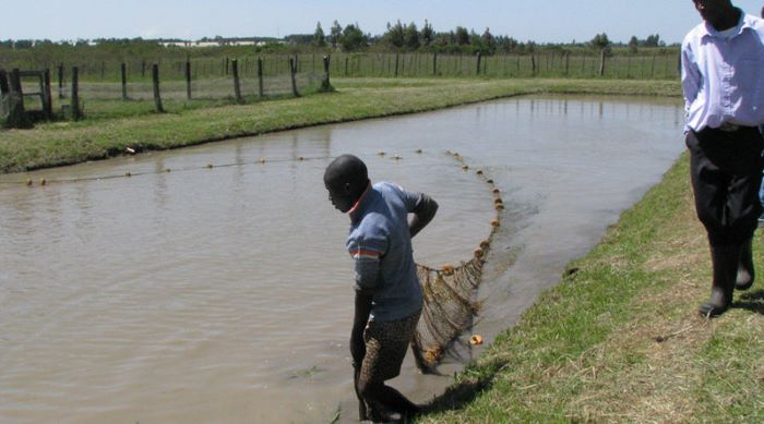 Kenya records lowest numbers in fish production from Lake Victoria in 5 years