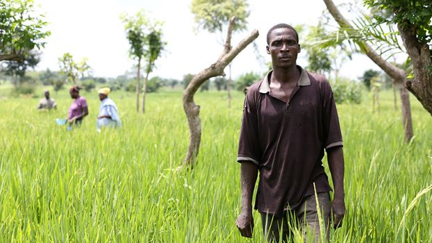 African Development Bank approves $3 million loan reallocation to agriculture sector for COVID-19 response