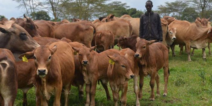 WAP launches free online course for livestock farmers