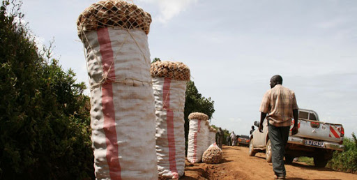 Potato farmers in Kenya suffer losses