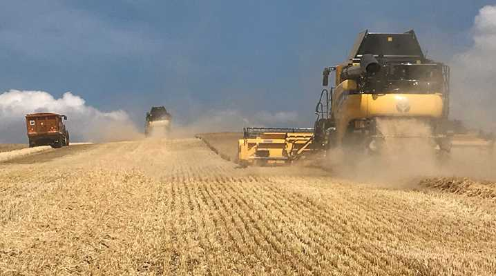 Big harvests for 2020, from the summer to winter crops