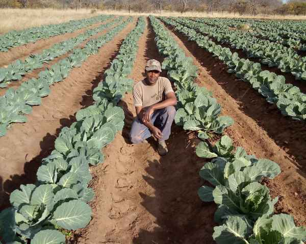 Transitioning from subsistence to a smallholder farming business