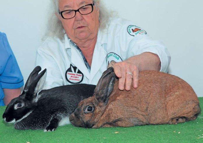 Rabbit breeder Karoline Steenkamp