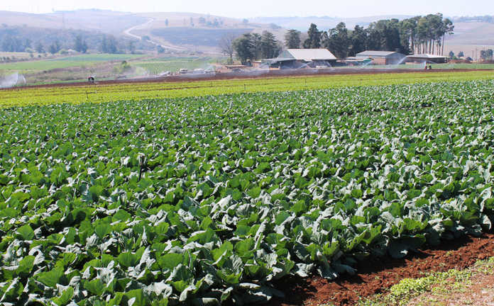 Agri SA aims to improve agri sector transformation