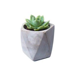 Arvex Concrete Pot with Succulent