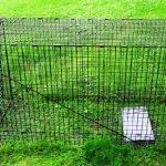 Humane-Trap-Live-Animal-Coyote-Stray-Cat-Fox-Raccoon-Trap-50x24x19-0