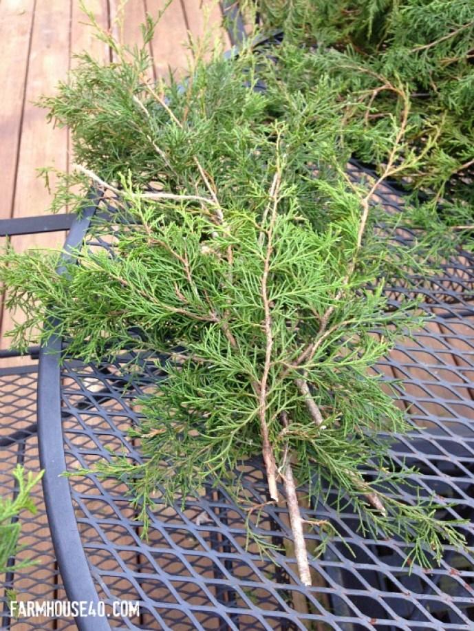 cedar cuttings keep adding to each other