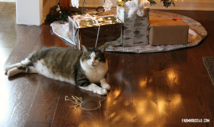cat and christmas tree 3327