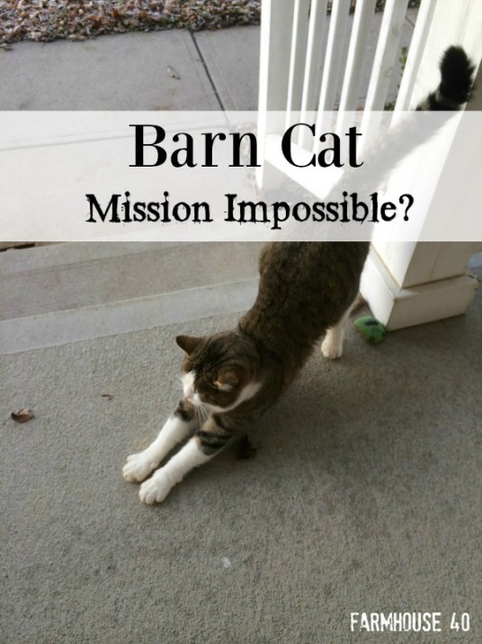 barn cat mission impossible