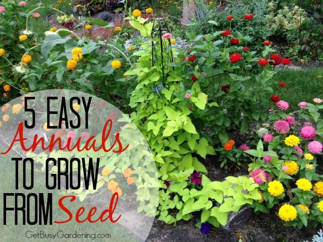 5easyannuals to grow from seeds