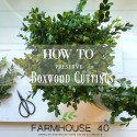 Boxwood – How To Preserve Cuttings