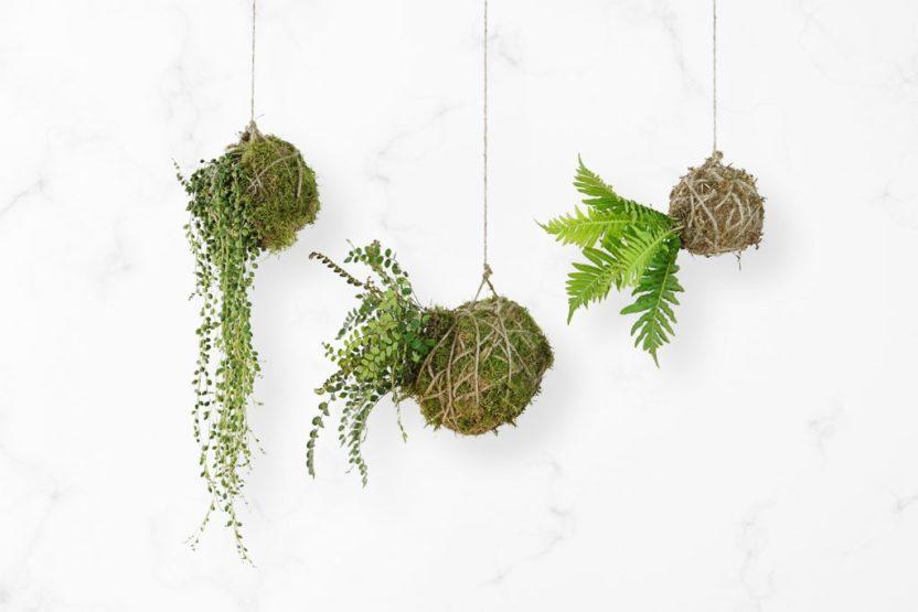 diy-kodedama-string-garden