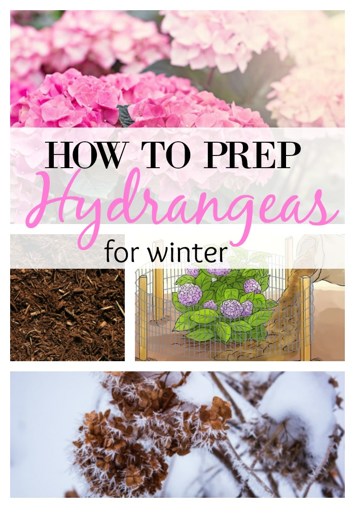 hydrangea-prep