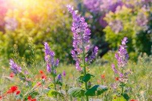 Gardening Routine