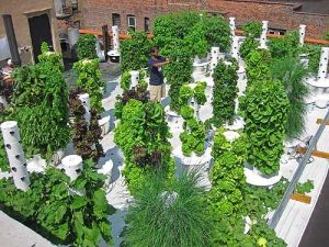 how to build Vertical Gardening Complete Guide to Building the Perfect Vertical Garden!