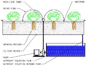 drip hydroponic farming