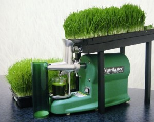 Juicing Wheat Grass with Nutrifaster