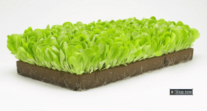 Hydroponic Starter Seeds Rockwool or Oasis