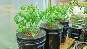Hydroponic system Maintenance and Location