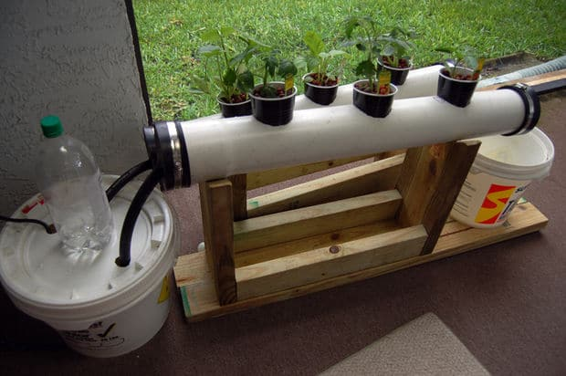 Simple DIY Hydroponic Systems