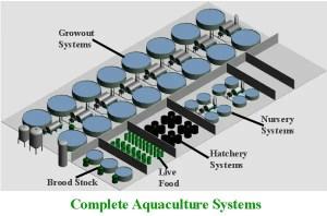 Aquaculture Systems Recirculation setup