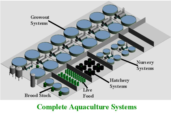 Aquaculture Systems Recirculation setup
