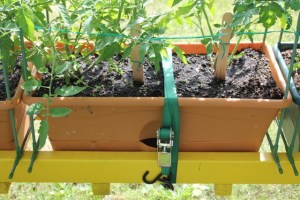 Garden patch grow box