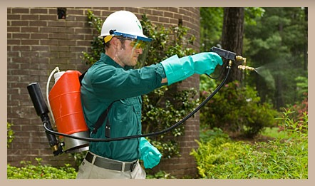 how to apply Pesticides safely