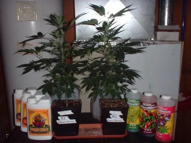 Hydroplex botanicare nutrients
