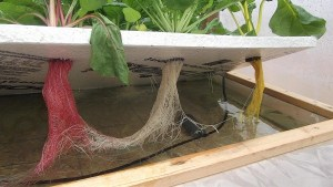 hydroponic raft