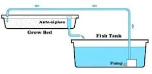 Aquaponics flood and drain system