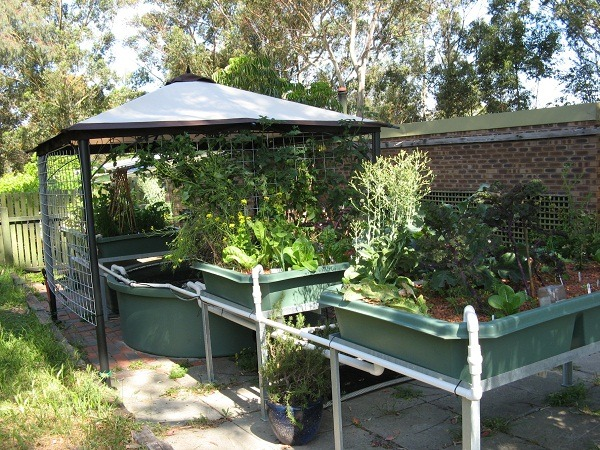 How To Setup Aquaponics System At Home - Things To Consider