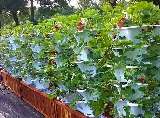 Ezgro Original hydroponic