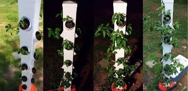 AquaVertica Grow System