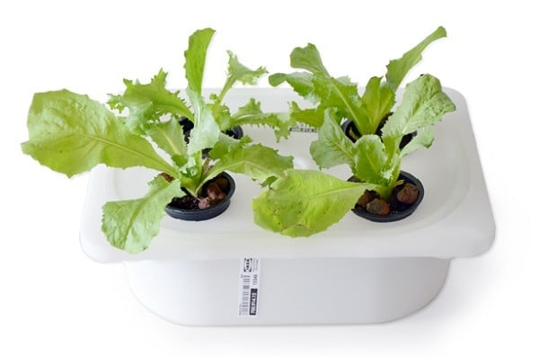 small container diy hydroponics system