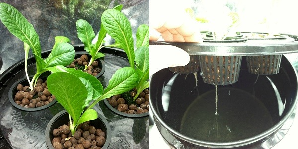 how to build hydroponic systems