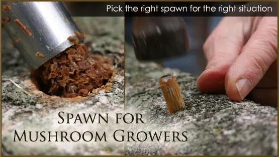 mushroom spawning