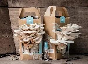 oyster mushroom Grow System Kit
