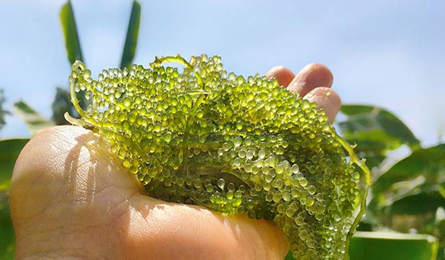 How To Start An Algae Farm Using Hydroponics