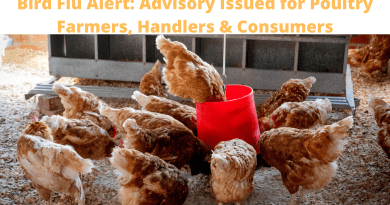 Bird Flu Alert: Advisory Issued for Poultry Farmers, Handlers & Consumers