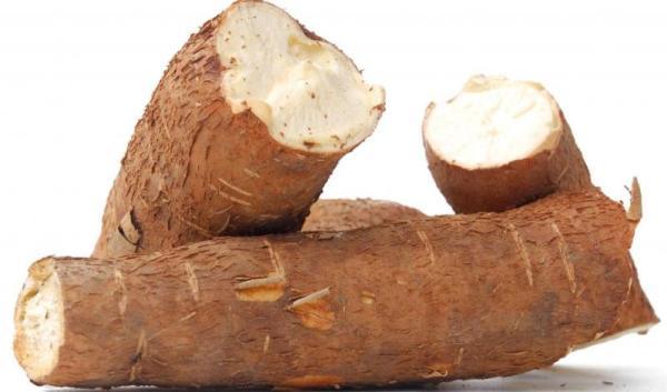 Cassava Farming Guide | FarmLINK Kenya
